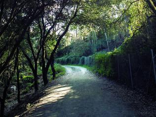 Recuperem els camins de Vallcarca a Collserola